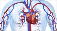 ultrametabolismo skład