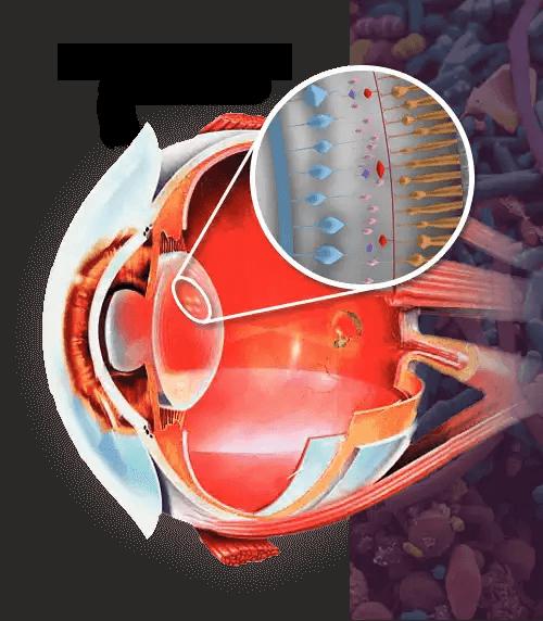 Eye Fortify results