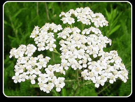 Pro Herbarium dietary supplement